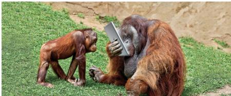 Monkey tablet