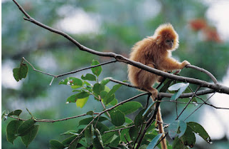 Monkey jungle