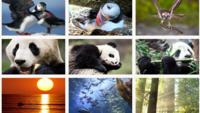 Aquarium of the Pacific - Live Cams - explore