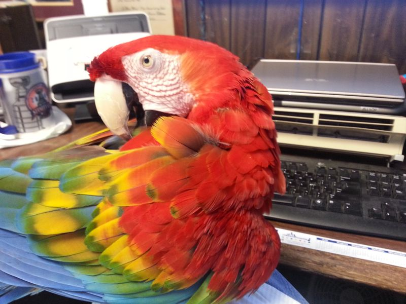Savannah Hogging The Keyboard
