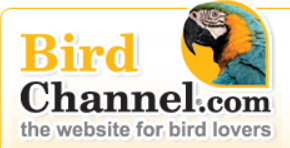 Birdchannel
