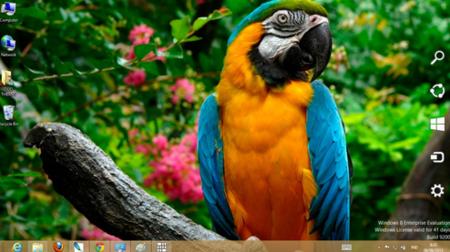Parrot theme