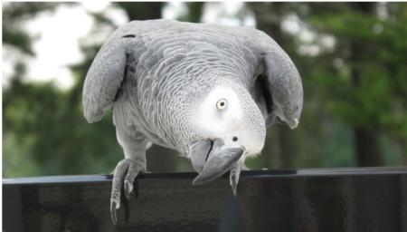 Parrotbrains