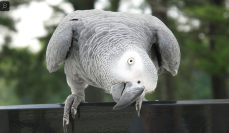 Smartbird