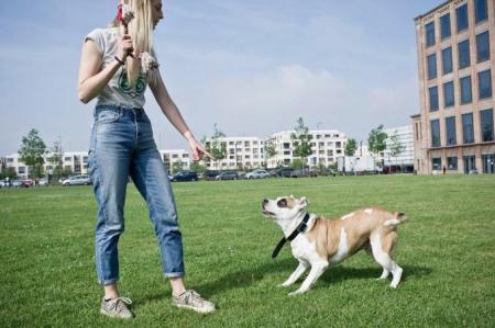 Smartdogcollar