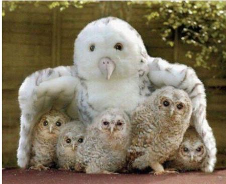 Owlfamily