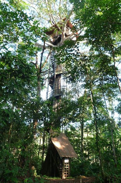Treehouseoffice