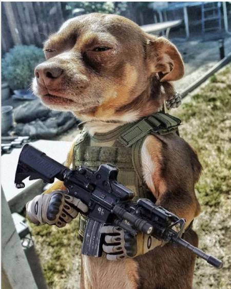 Dogsheriff