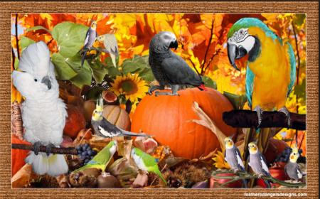 Thanksgivingparrots