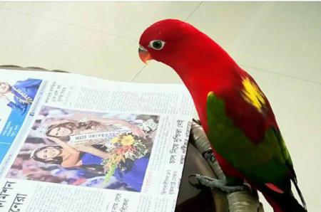 Parrotreadingpaper
