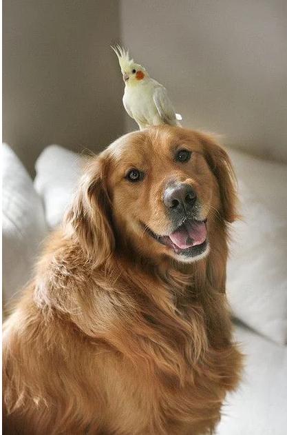 Birdondog