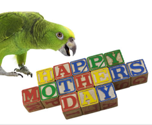 Mother's day parrot