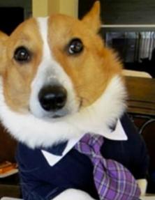 Lawyerdog