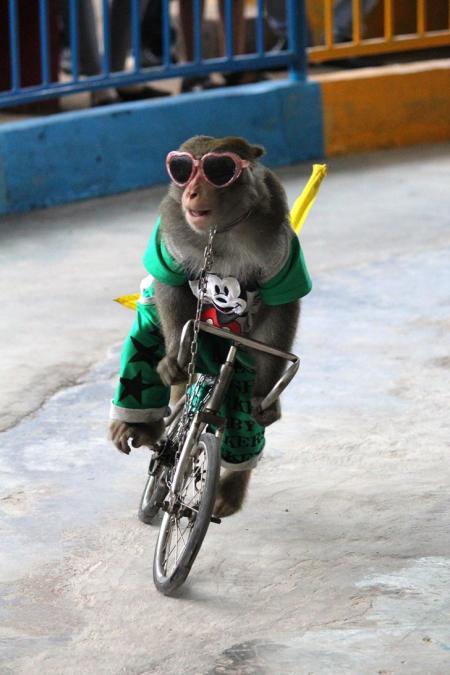 Monkeycircus