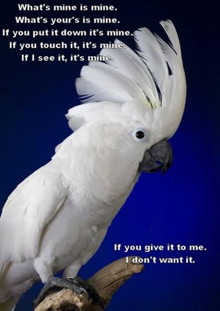 Parrotlogic