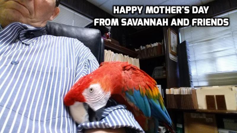 Savannahmothersday