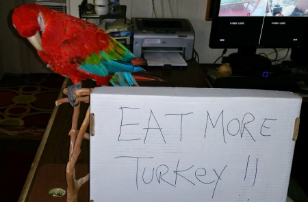 Savannahandturkey