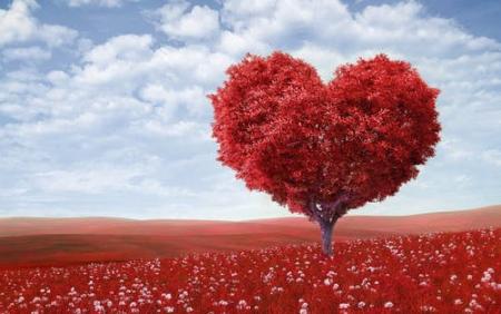 Valentinesdayroses