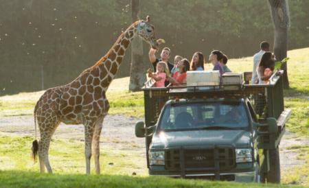Safaritour