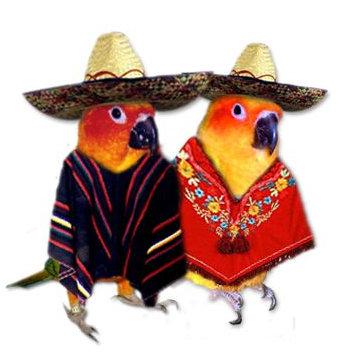 Cincodemayobirds
