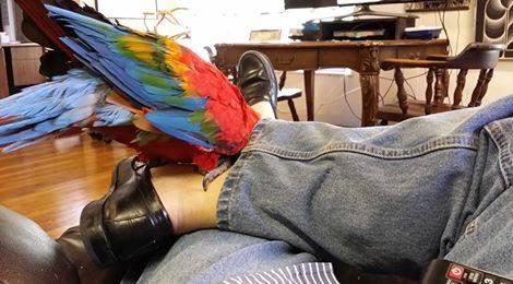 Savannah leg