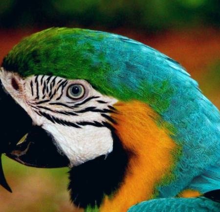 Futurelawyer: Parrot Sunday