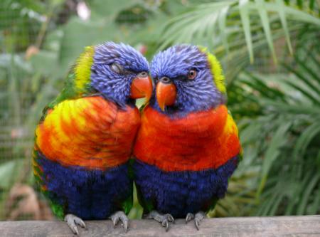 Parrotsinlove