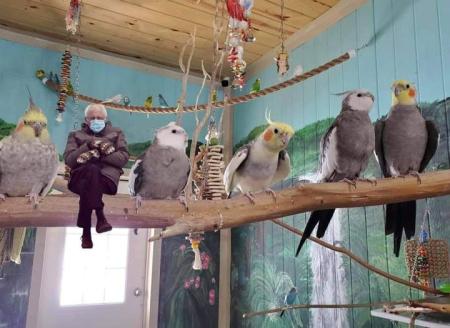 Bernie birds