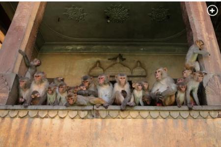 Monkeysvirus