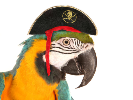 Pirate-macaw-parrot-studio-cutout-57987215