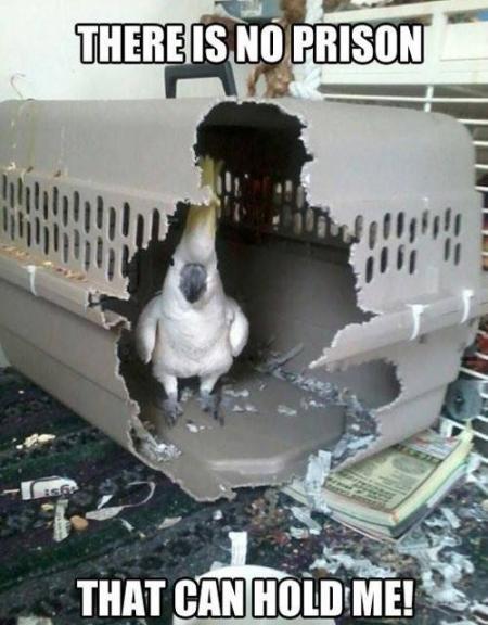 Parrotprison