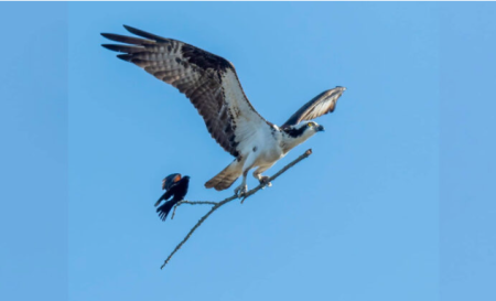 Birdtaxi