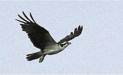 Ospreyflight2