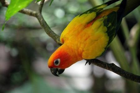 Parrot-217136_1280_large