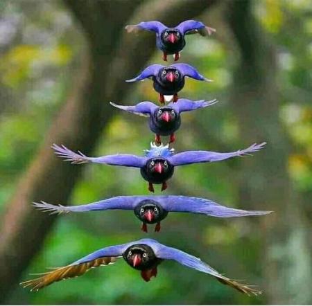 Flyingformation