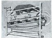 Dogtreadmill